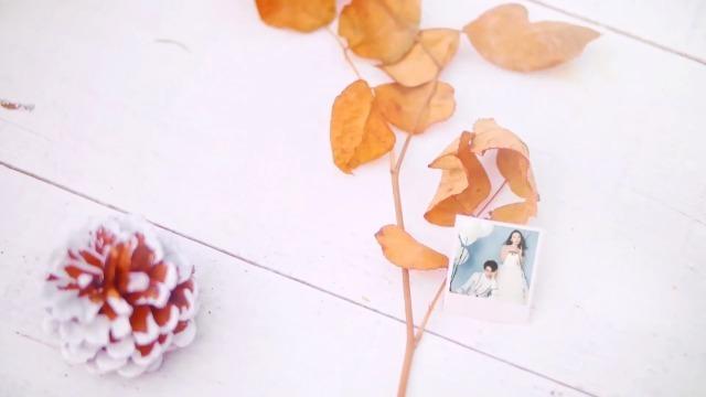 大树下清新唯美的婚礼相册7预览图